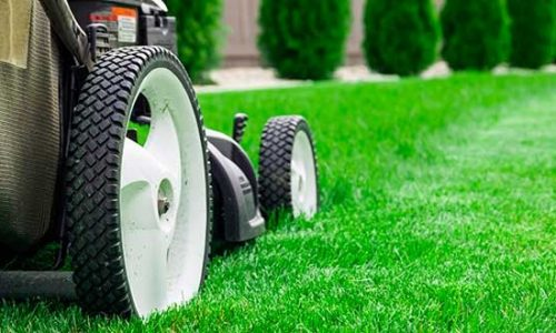 Top 5 Tips For Lawn Care