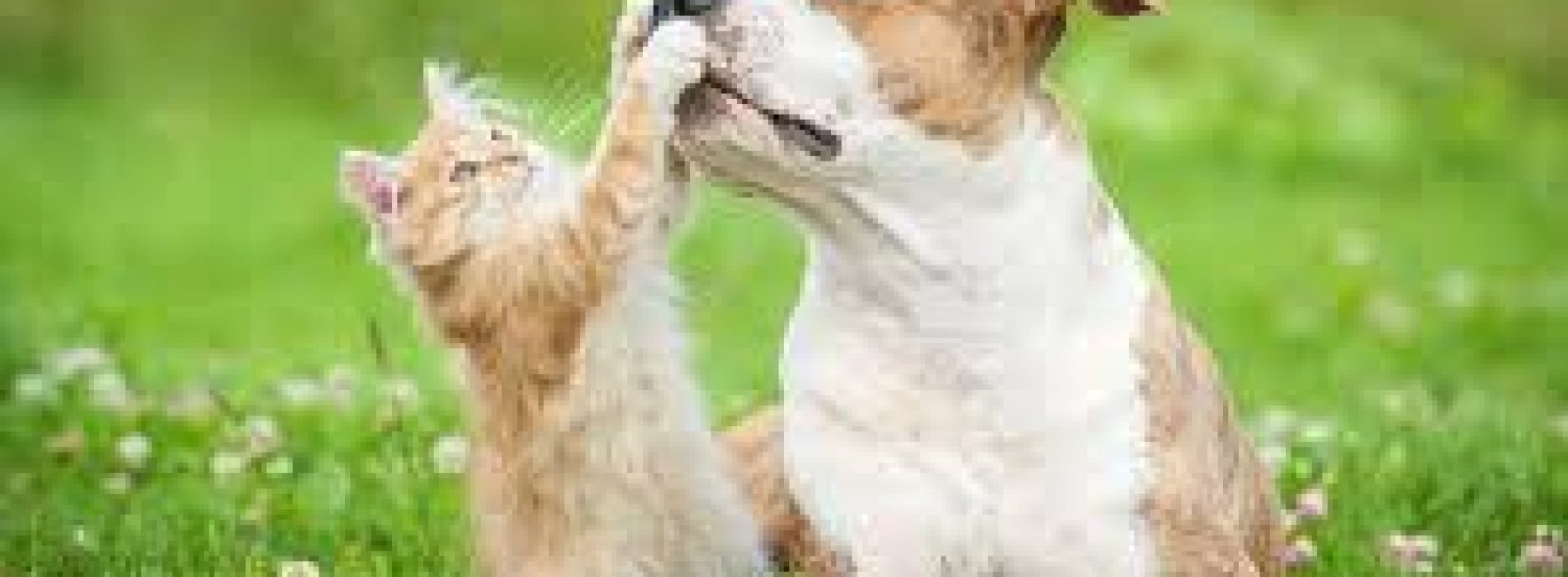 Housebreaking Your Pit Bull Terrier: Puppy Dog Training