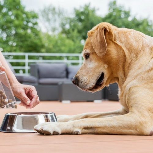 How to choose the ideal Quality Pet Food for your beloved pet